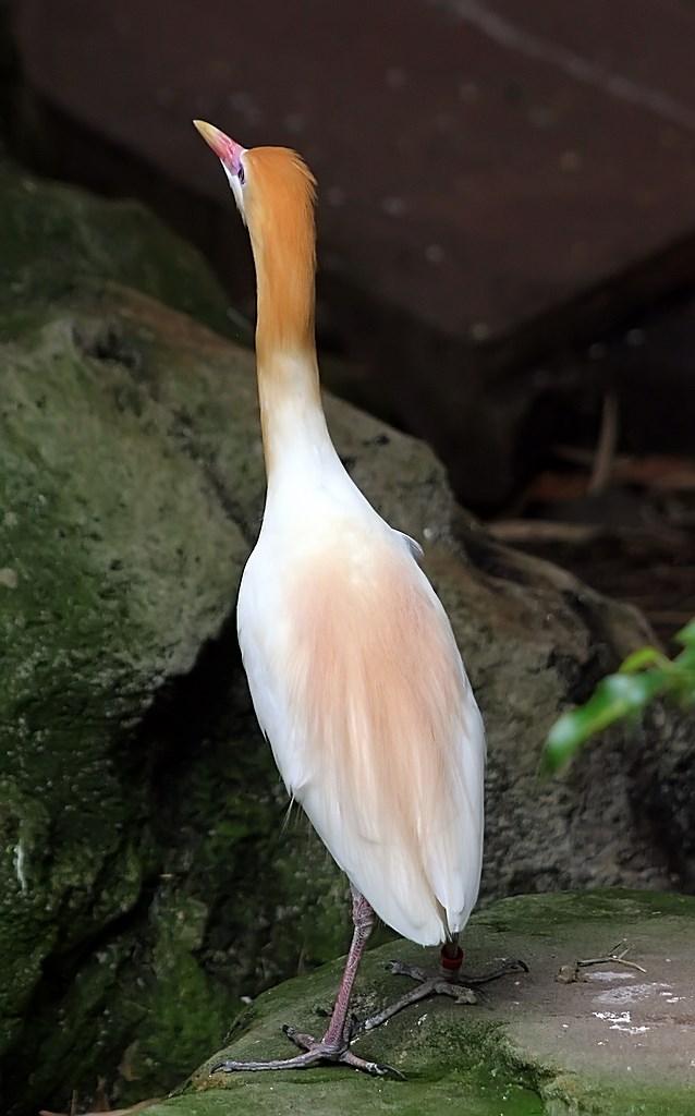 Bird  (4)