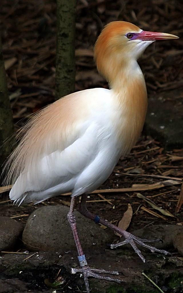 Bird  (5)