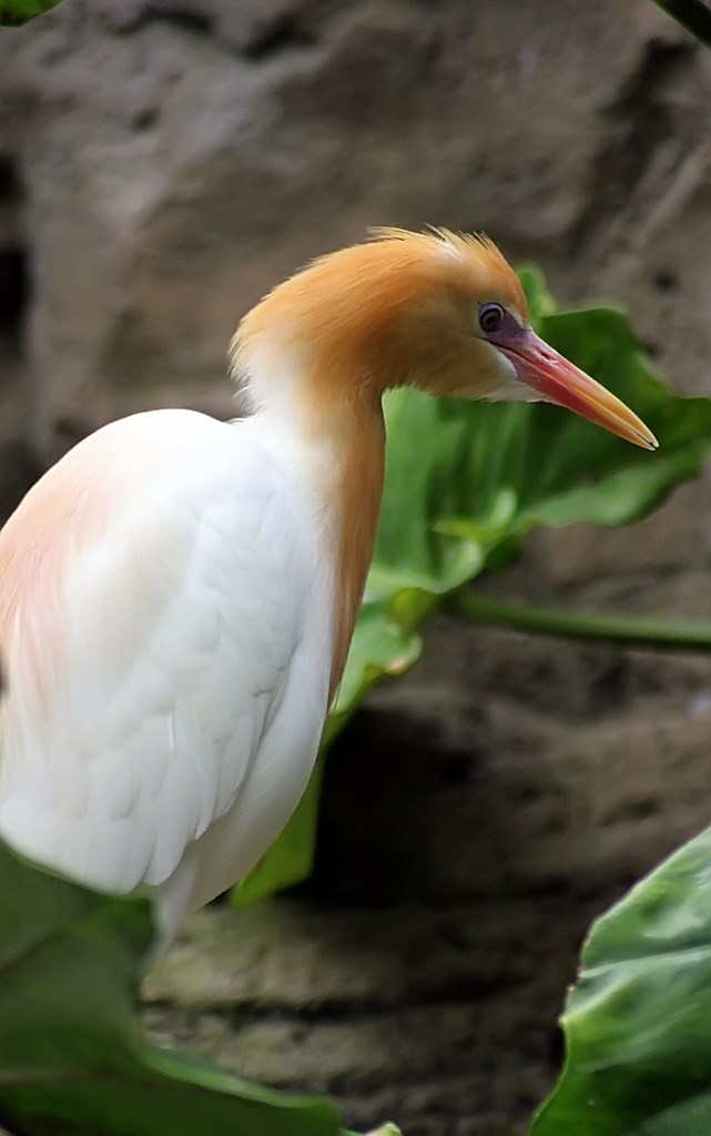 Bird  (8)